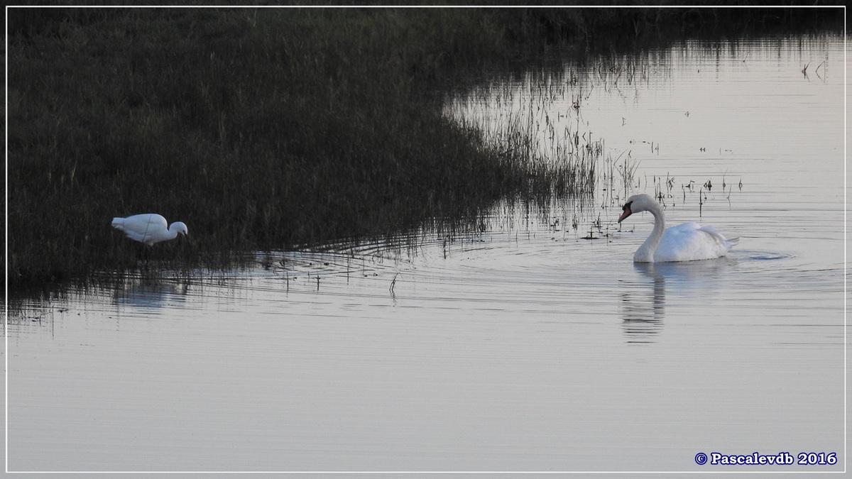 Port du Rocher - Novembre 2016 - 5/6