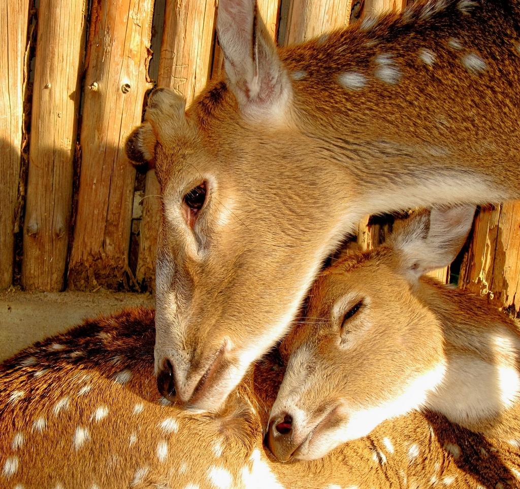 22.baby-animals