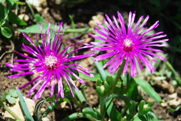 Flore en Europe