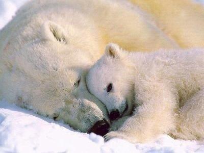 mamans-bebes-animaux-maman-bebe-polaire-img.jpg