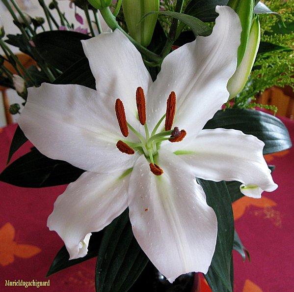 Fleurs-1310.JPG