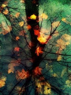 Echange ATC arbre d'automne