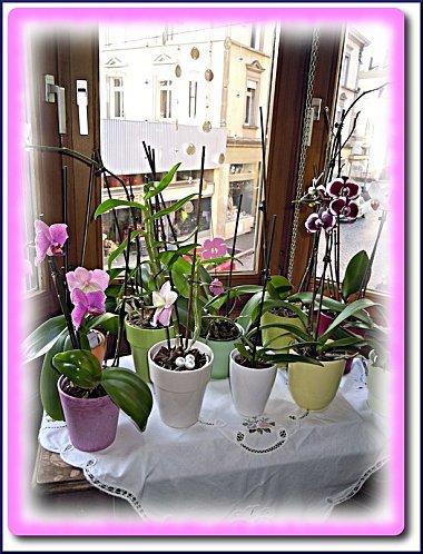 orchidees-martine-3.jpeg