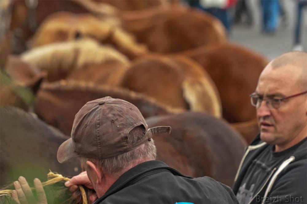 Le cheval breton de coupe en tressage de crinières : Les gars de l'Odet