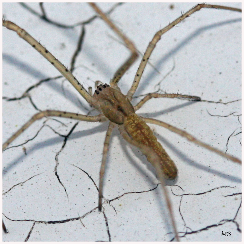 Arachnides-04-7182.jpg
