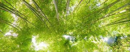 Soyez persévérant comme le bambou !