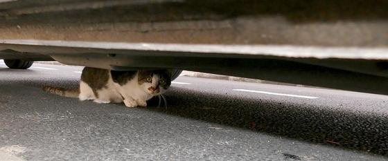 05 - Cats...Sous la voiture