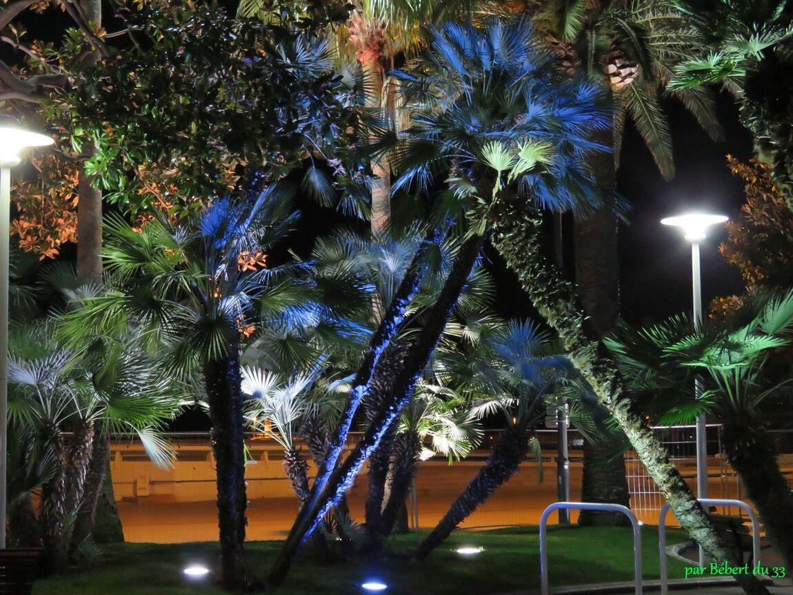 Palmiers à Cannes