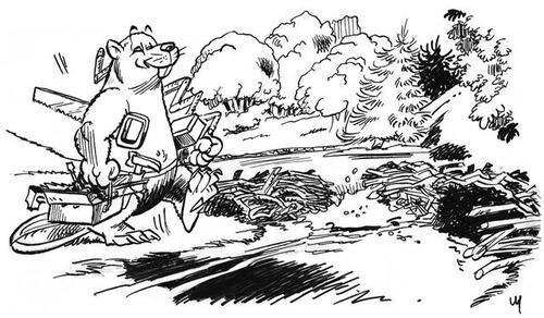 le castor : architecte, plongeur et bâtisseur