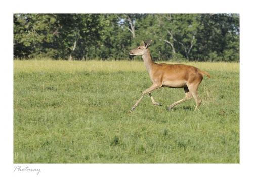 La ferme aux cerfs - Le Houga - Gers