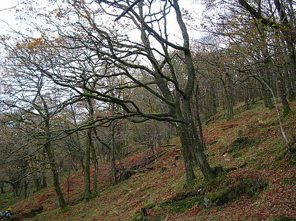 Loch Lomond 34