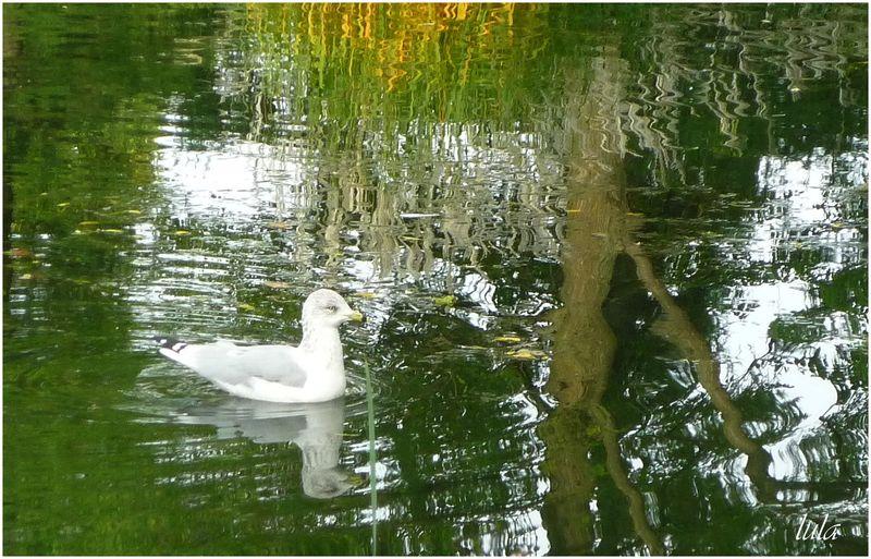 Reflets sur l'eau (#3)