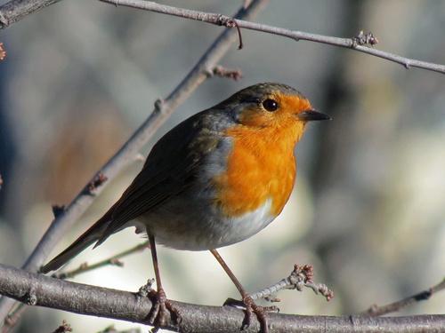 Le Sentier des Oiseaux d'Ansignan