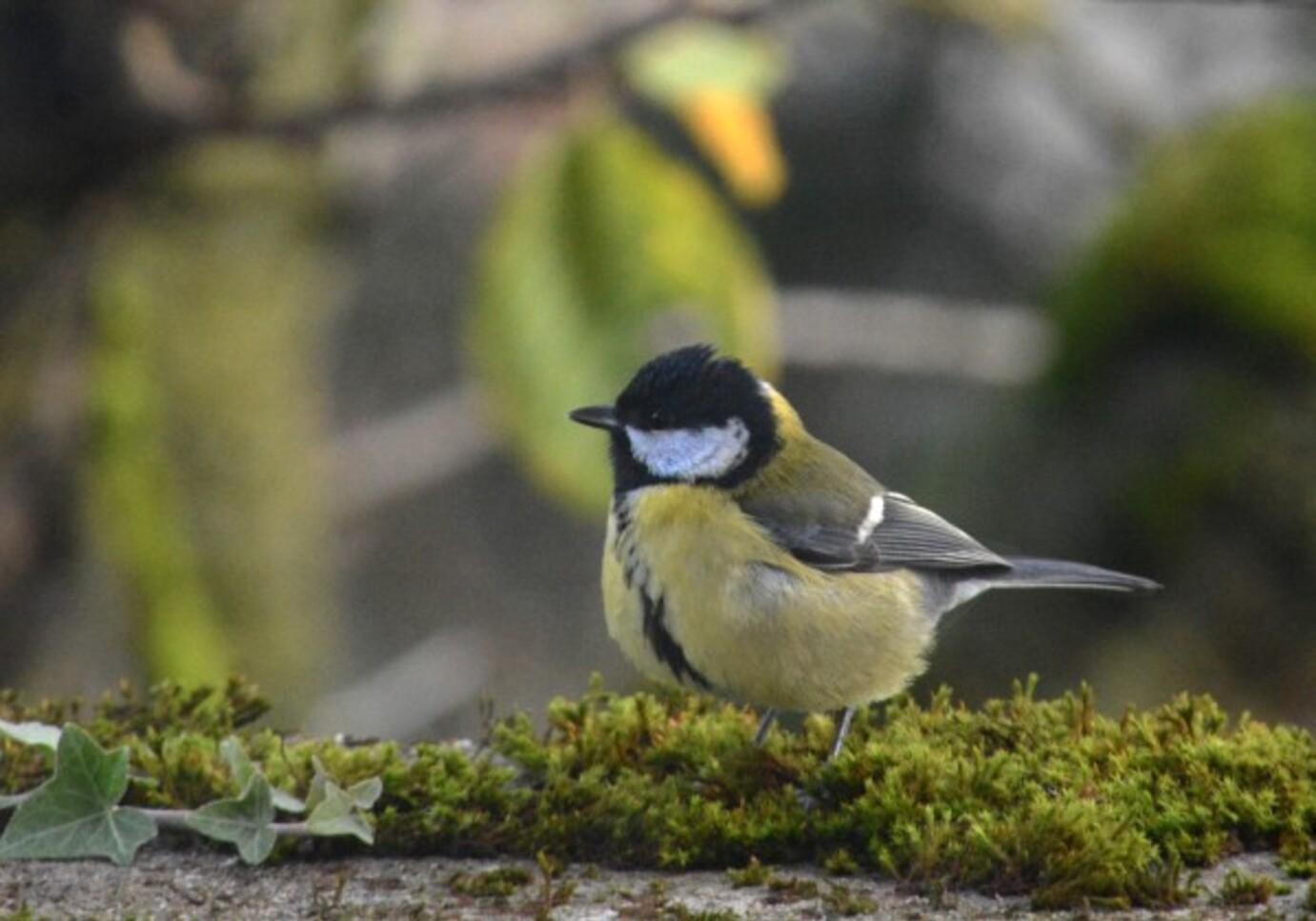 Oiseaux-2-5000a.jpg