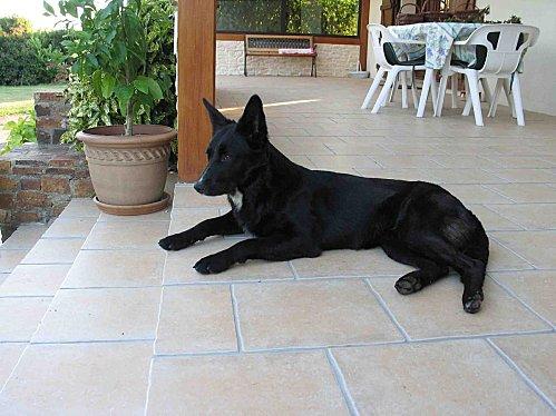 Dahlia bis2011 07 03