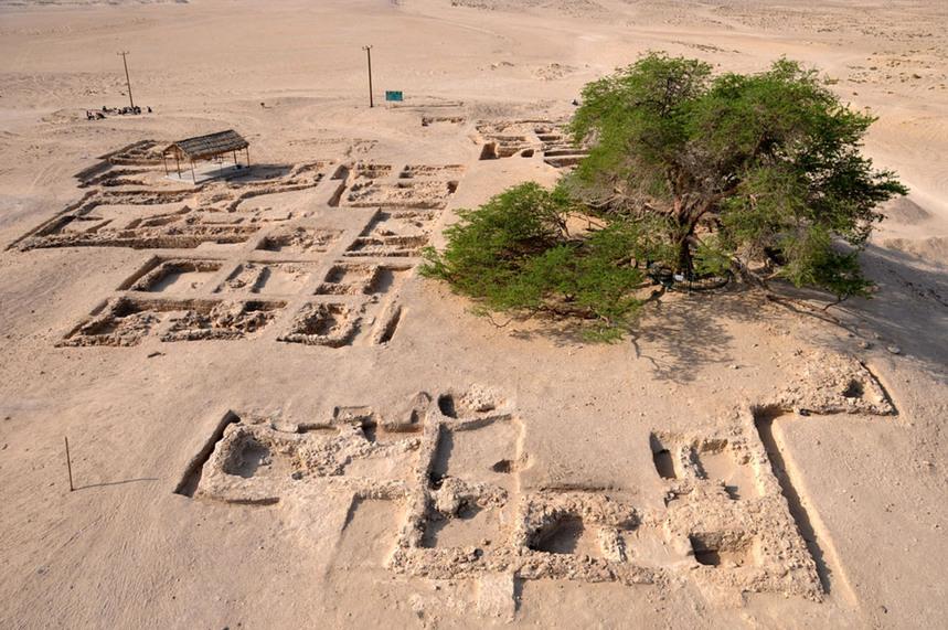 Résultat d'images pour l'arbre de vie proposis dans le desert de bareim