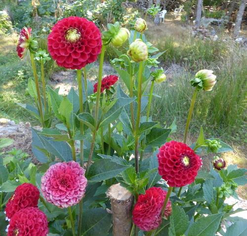 - Des défis sur nos chemins - Des fleurs aussi -