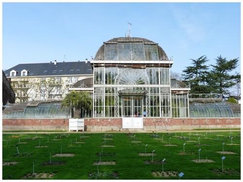Le jardin des plantes , un matin d'hiver