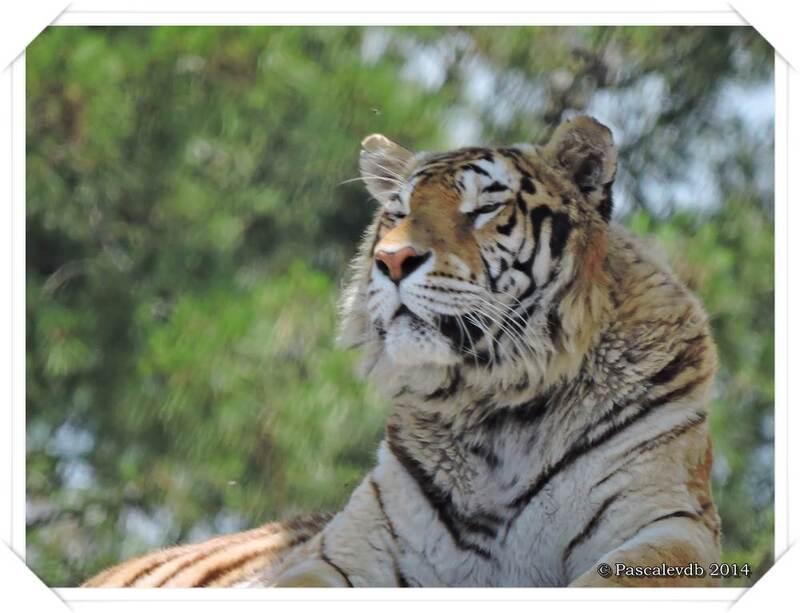 Zoo du Bassin d'Arcachon à La Teste de Buch - 10/20