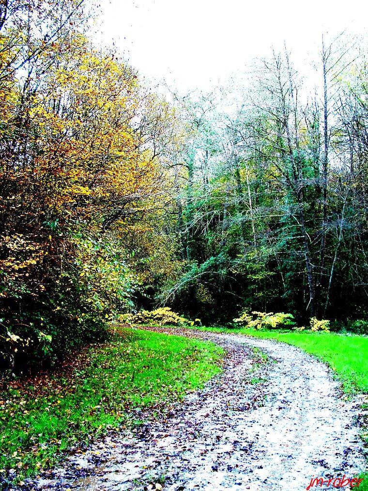 L'automne et ses photos insolites