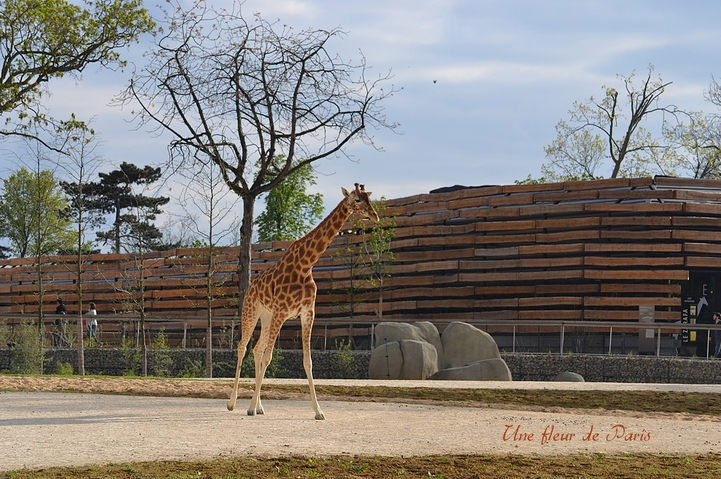 Le Zoo de Vincennes ressuscité