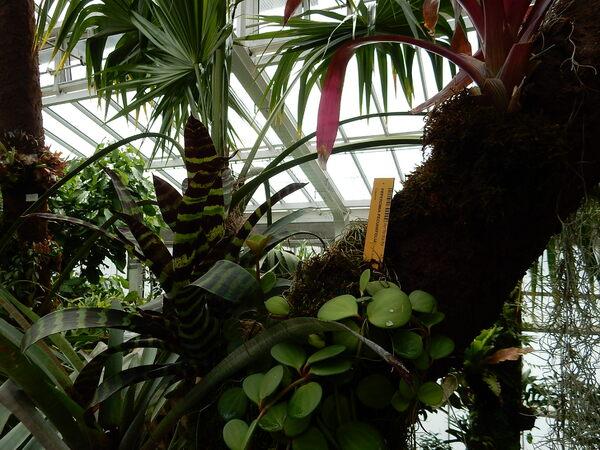 Dans le palais des plantes à Meise