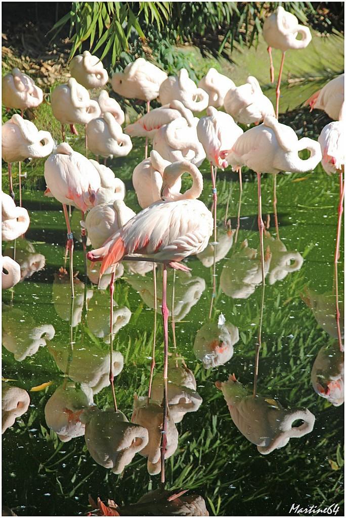 Oiseaux 02 Famants roses 7402