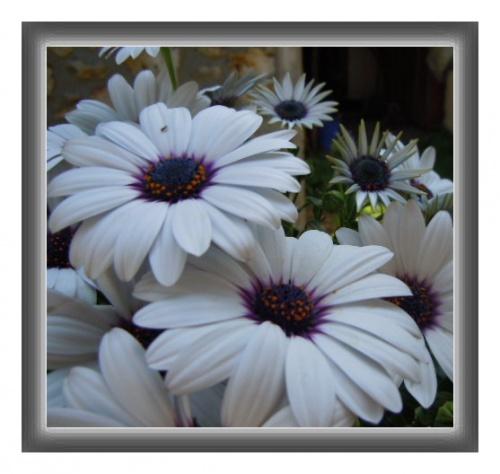 Juste quelques fleurs