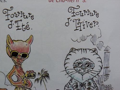 suite Amicale du Club Félin-chats de A à Z
