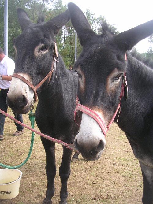 Fête de l'âne 2015