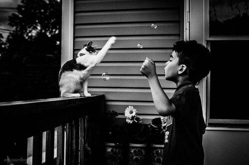 05 - Des chats et des enfants, suite