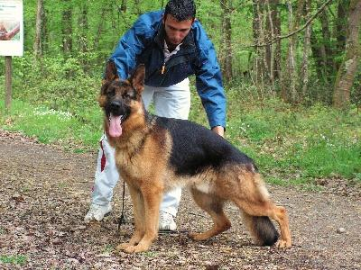 Le Berger allemand - Bienvenue sur nos.pets