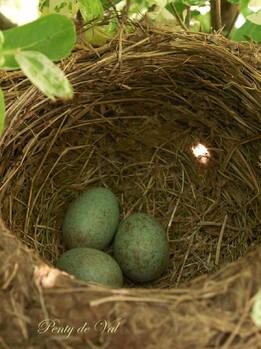 Le nid (Lucie Delarue-Mardrus)