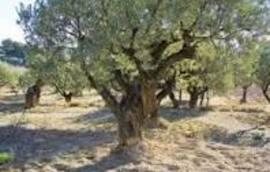 Rassemblement des 12 tribus d'Israël   Blog Qehila (2ème partie)