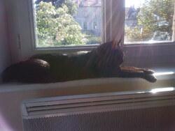Le chat et le soleil ... poème de Maurice Carême !