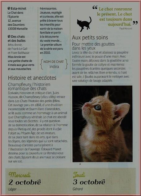 ♥ Secrets de chats suite ♥