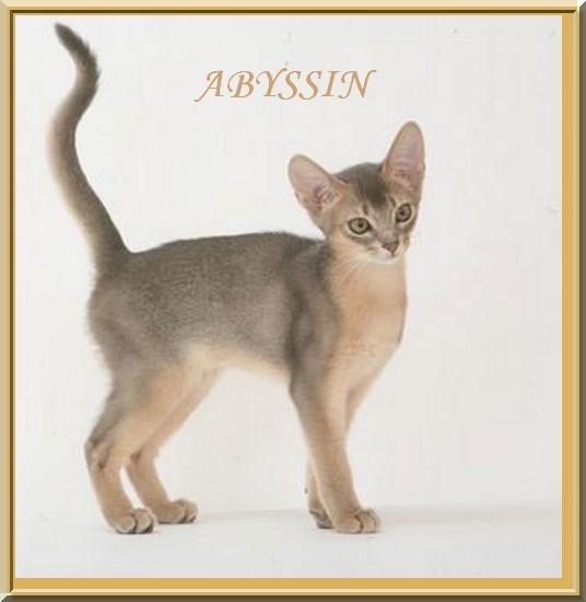 chat-race-abyssin7