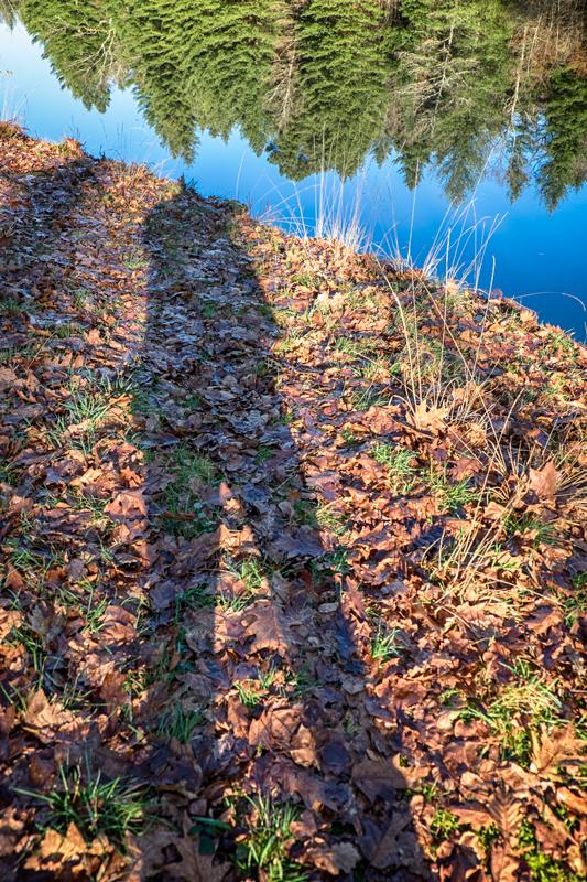 Balade hivernale en forêt de Bort