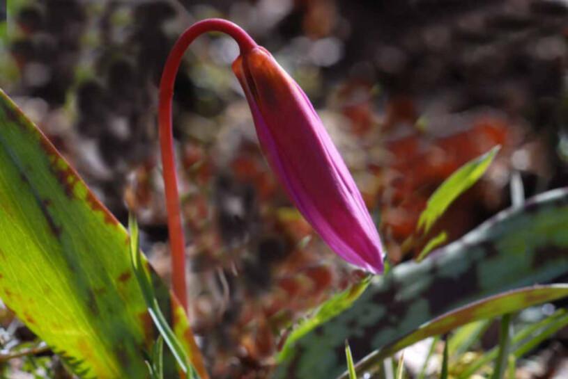 Fleurs-6 2835 modifié-1