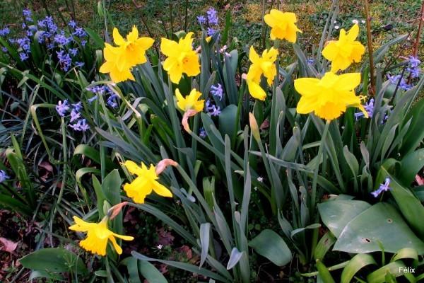 P02---Narcisse.JPG