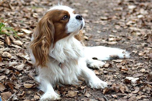"""Résultat de recherche d'images pour """"Petits chien images"""""""
