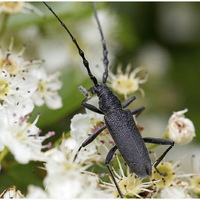 Insectes 4