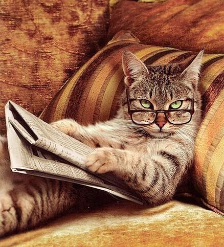 """Résultat de recherche d'images pour """"chat à lunette"""""""