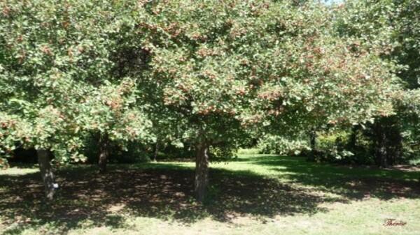 Jardin-botanique--5-.JPG