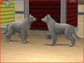 Larans Dogs : Actu (18 génération bientôt)
