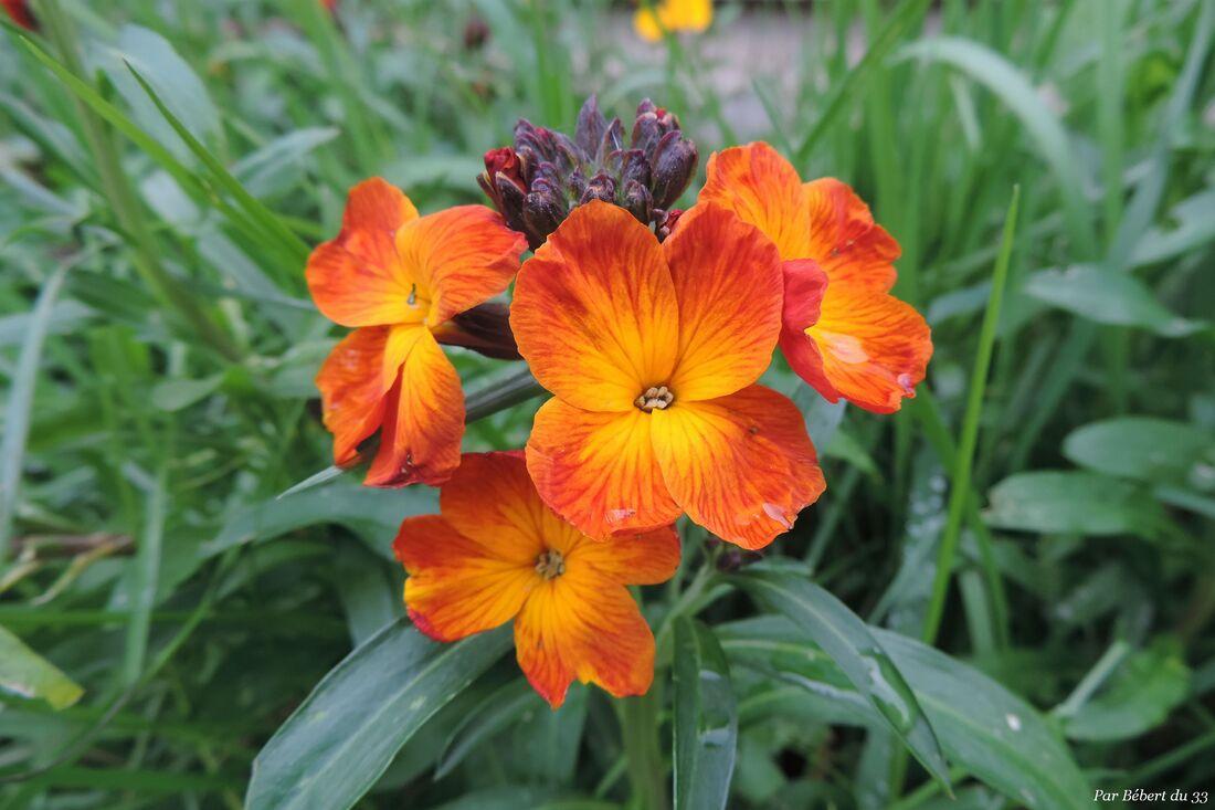 des fleurs de mon jardin !