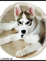 Louna (2,5 mois)