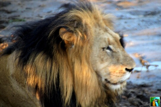 Afrique du Sud : juin 2018 : Nouvelle découverte 1/4