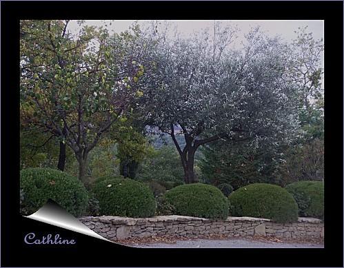 topiaires-et-oliviers.jpg