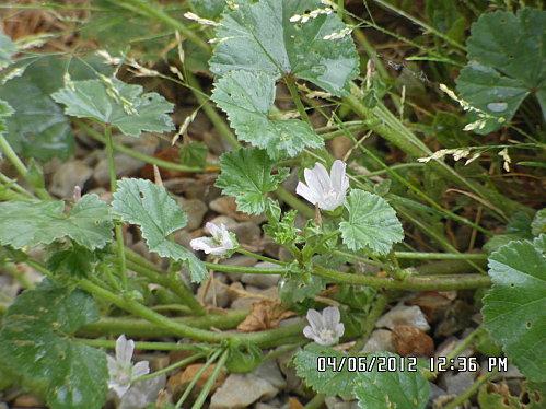 fleurs-5-Juin-002.JPG